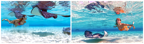 sting ray city grand cayman swimming, Yacht Charters